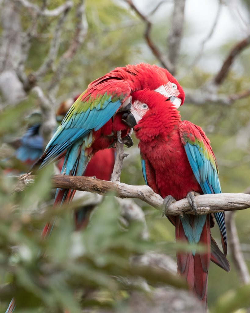 Macaws, the Mob & Heaven on earth